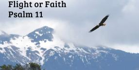 Flight or Faith